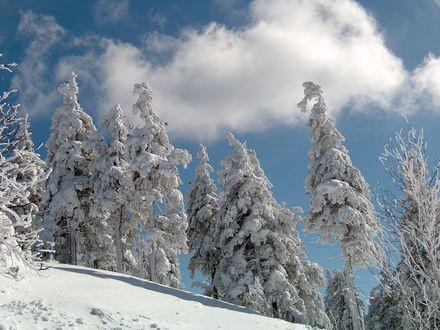 verschneiter Hang und verschneite Bäume bei wolkigem Himmel