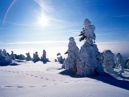 Ein unberührter verschneiter Wald auf dem Wurmberg im Sonnenlicht und tiefblauem Himmel