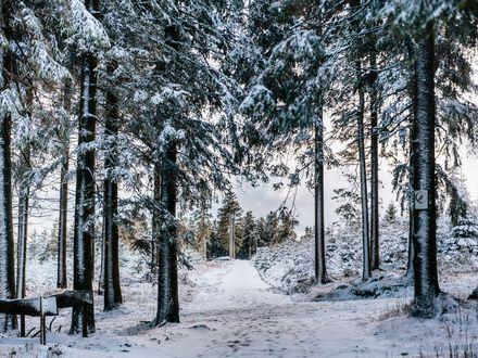 Ein verschneiter Wanderweg am Wurmberg.